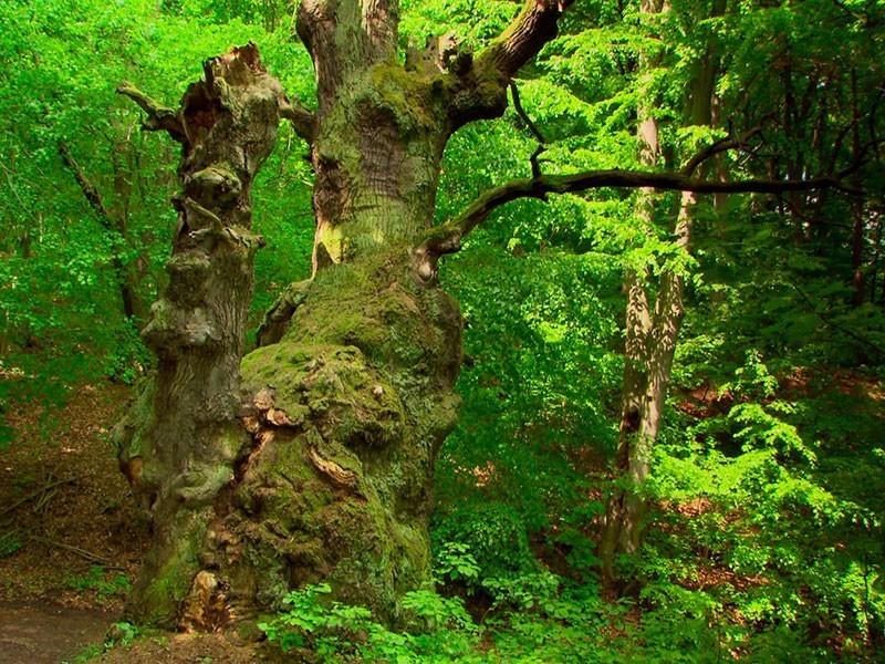 ein urwüchsiger Wald und noch ein Geheimtipp