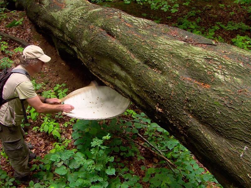 Insektenforscher finden Urwaldreliktarten