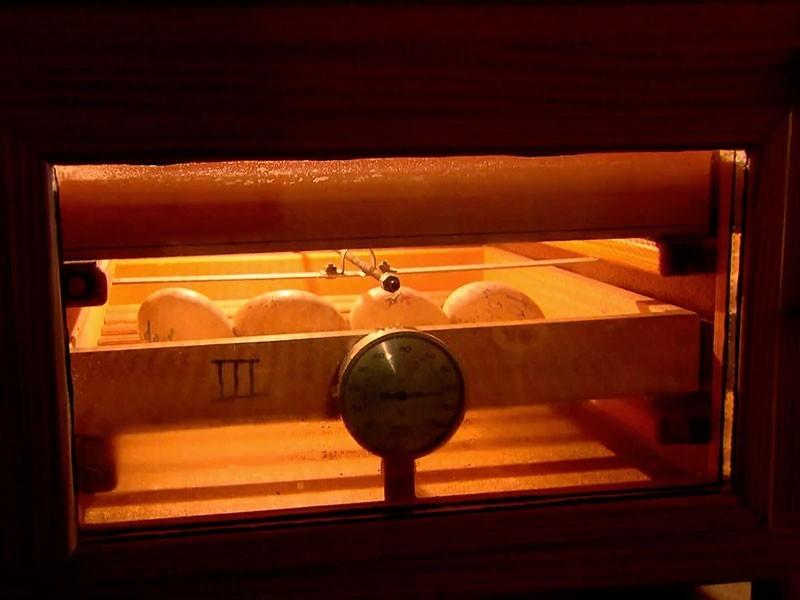 letzte Rettung für verwaiste Storcheneier – Brutkasten und Handaufzucht